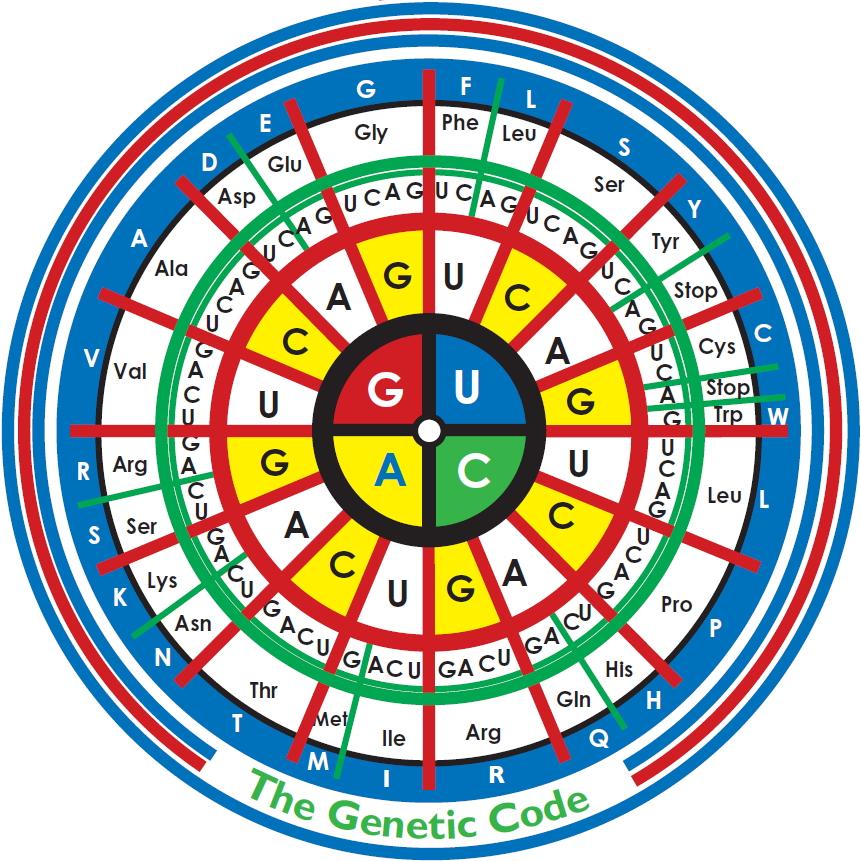 Код Генетический фото